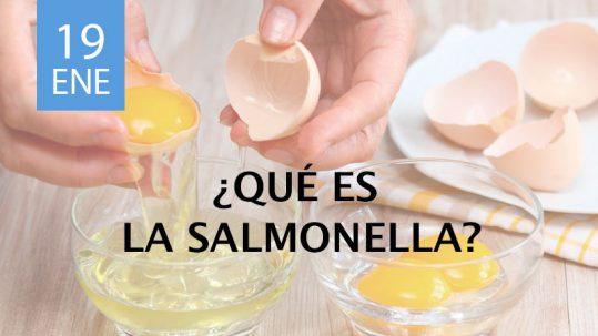 qué es la salmonella